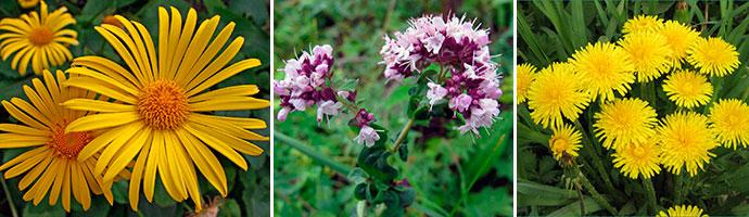 лекарственные травы для повышения кислотности