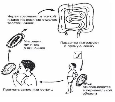 самозаражение энтеробиозом