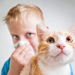 Аллергия на кошку на коже симптомы