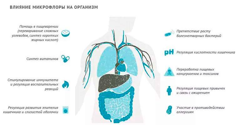 влияние микрофлоры на организм